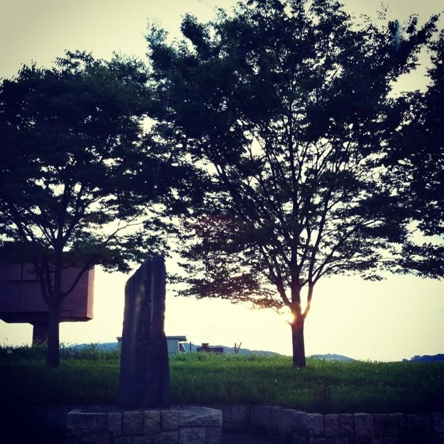 てらされる木々と光と影