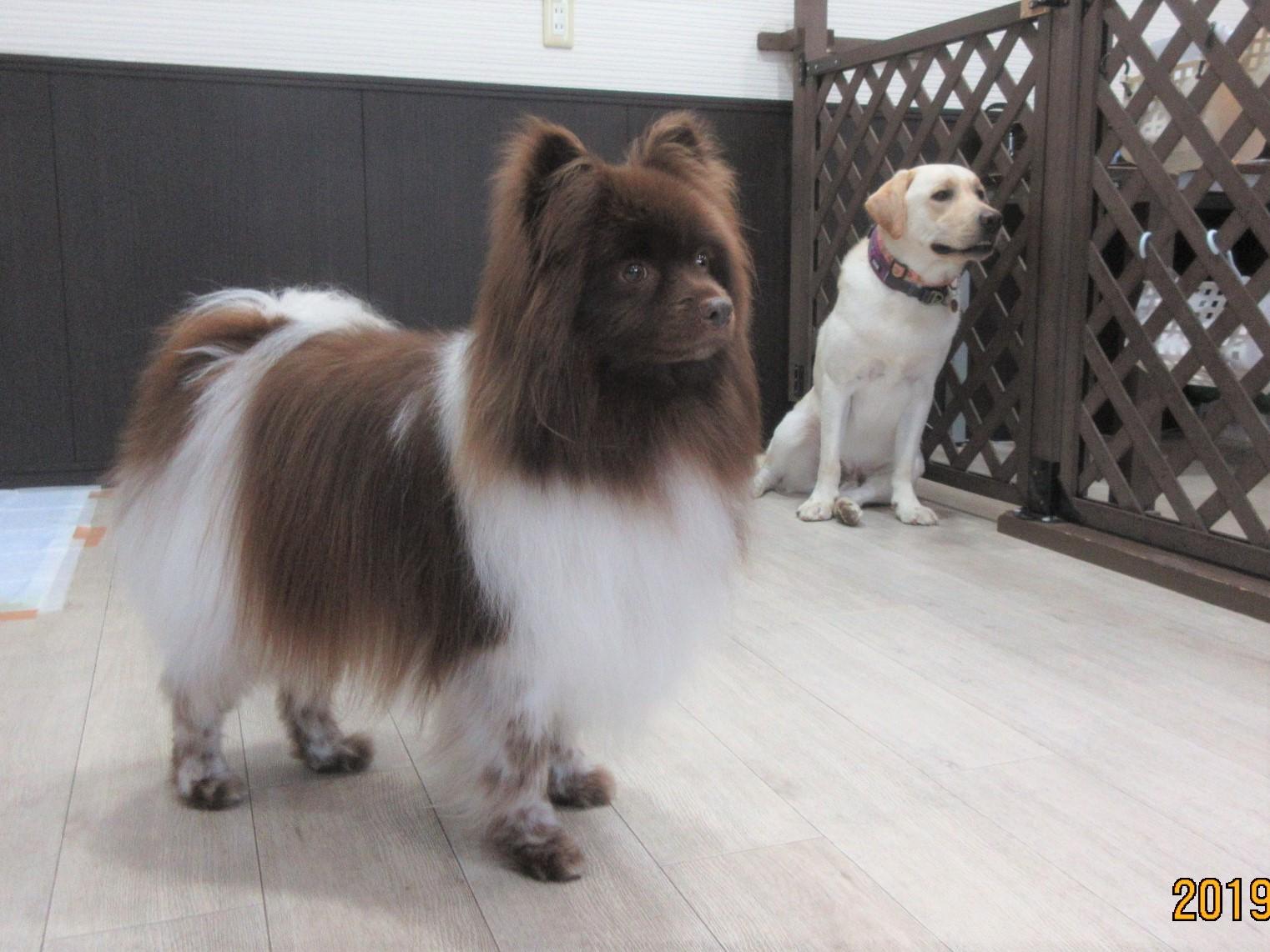犬の保育園Baby・犬・犬のしつけ・犬の社会化