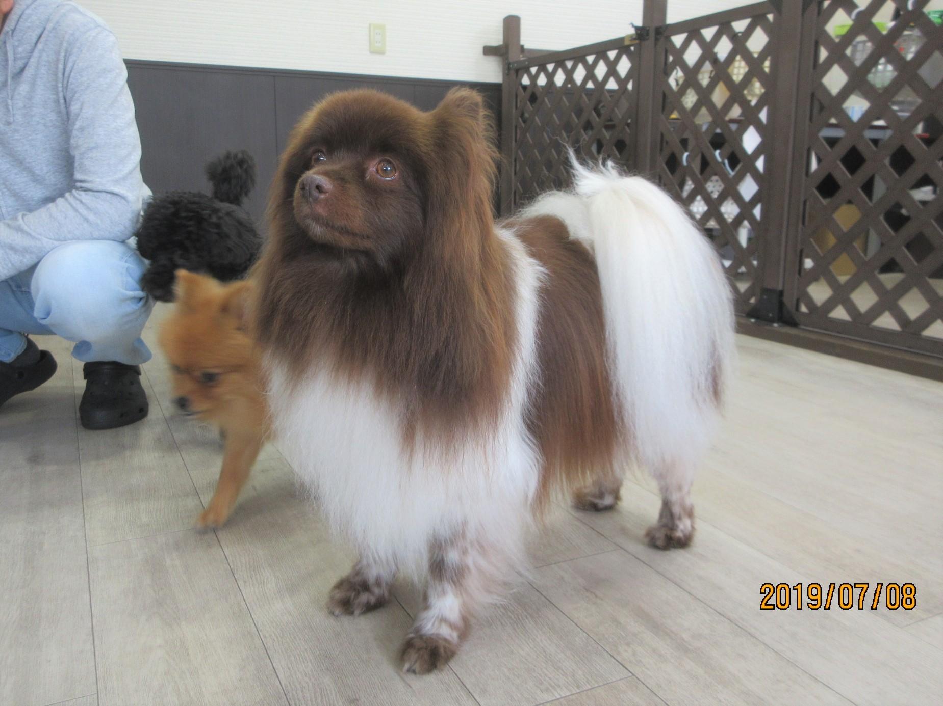 クッキー・犬の保育園Baby・犬・犬のしつけ・犬の社会化