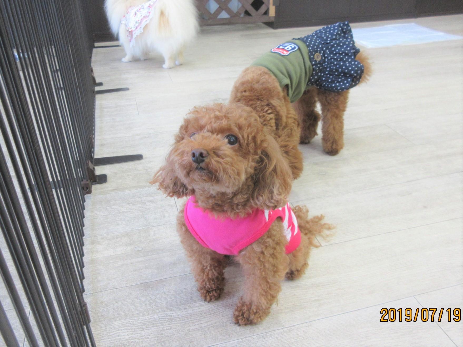 ナナちゃん・犬の保育園Baby・犬・犬のしつけ・犬の社会化