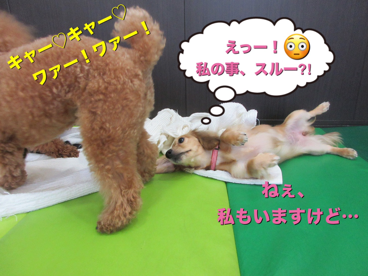 犬の保育園Baby・犬・犬のしつけ・犬の社会化・習志野市・八千代市・船橋