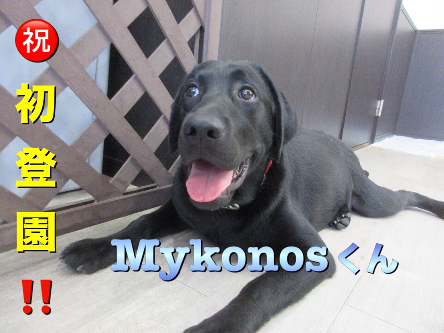 Mykonosくん・犬の保育園Baby・犬・犬のしつけ・犬の社会化・習志野市・八千代市・船橋市
