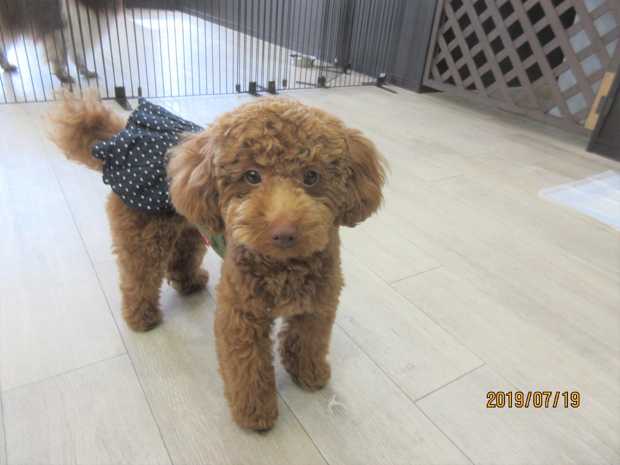 ぽっぽちゃん・犬の保育園Baby・犬・犬のしつけ・犬の社会化