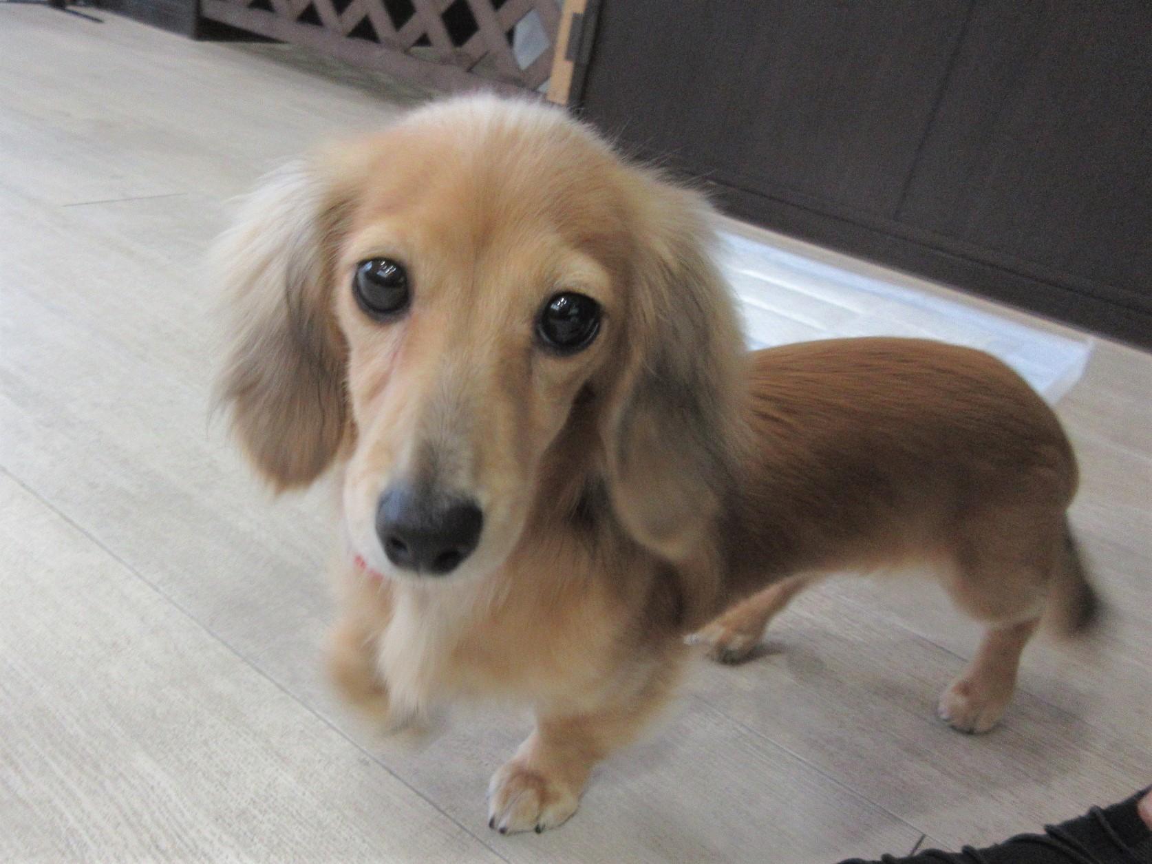 ことちゃん・犬の保育園Baby・犬・犬のしつけ・犬の社会化
