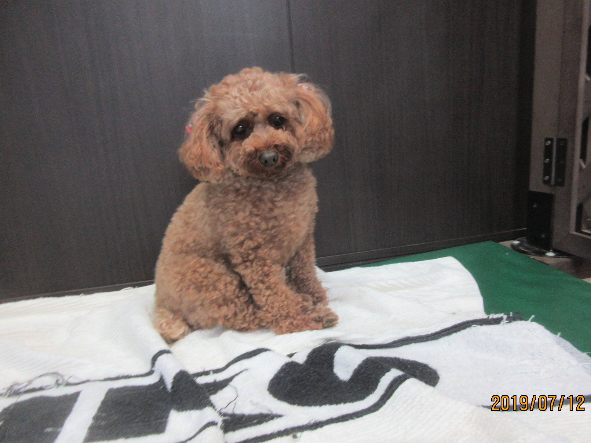 モモちゃん・犬の保育園Baby・犬・犬のしつけ・犬の社会化