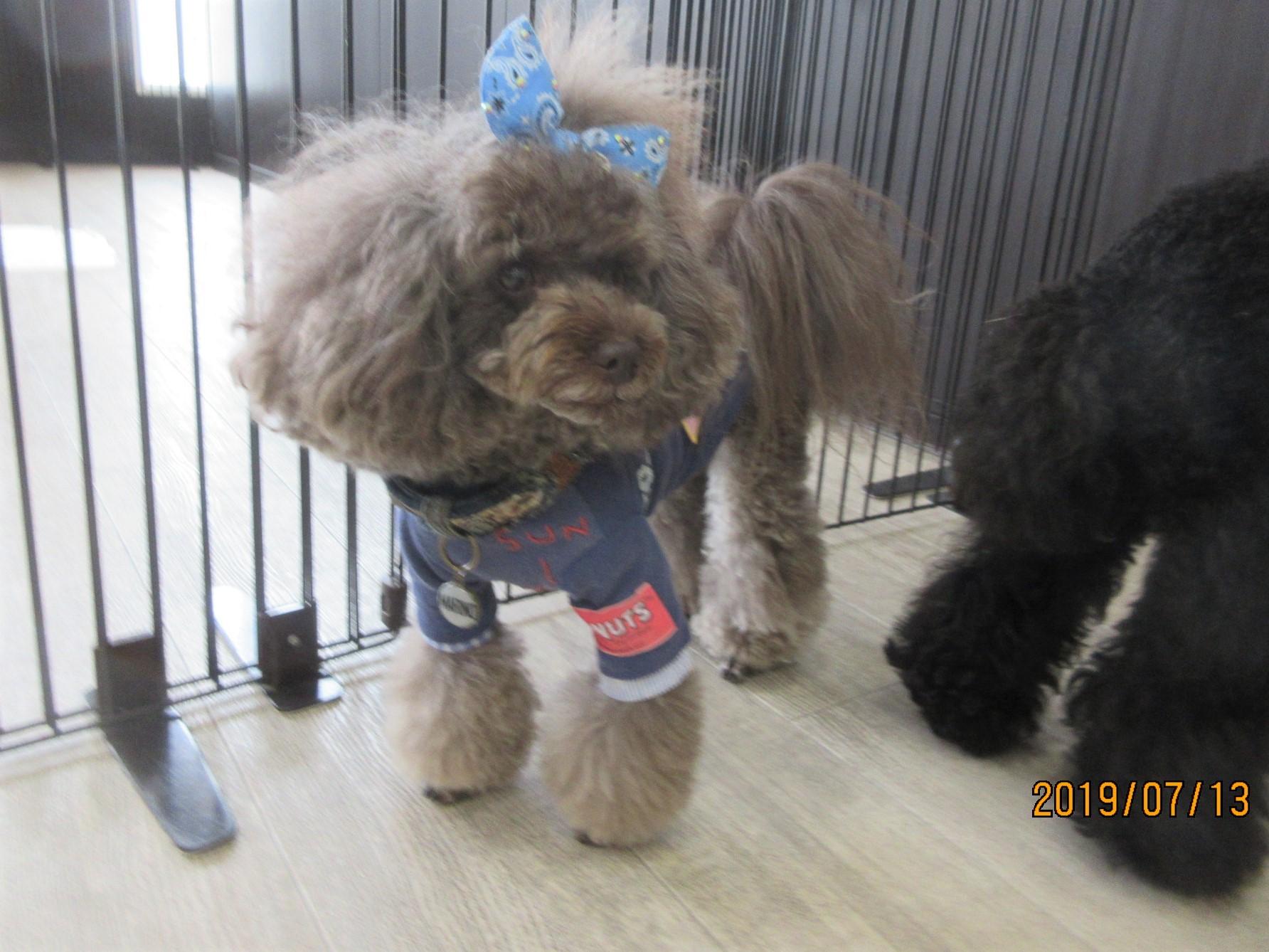 マリノちゃん(通称マリちゃん)・犬の保育園Baby・犬・犬のしつけ・犬の社会化