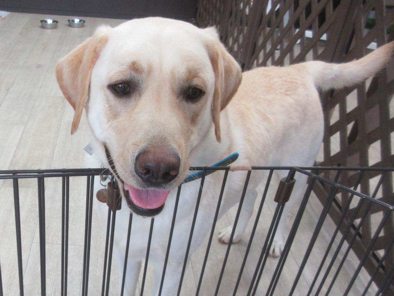 Osloくん・犬の保育園Baby・犬・犬のしつけ・犬の社会化