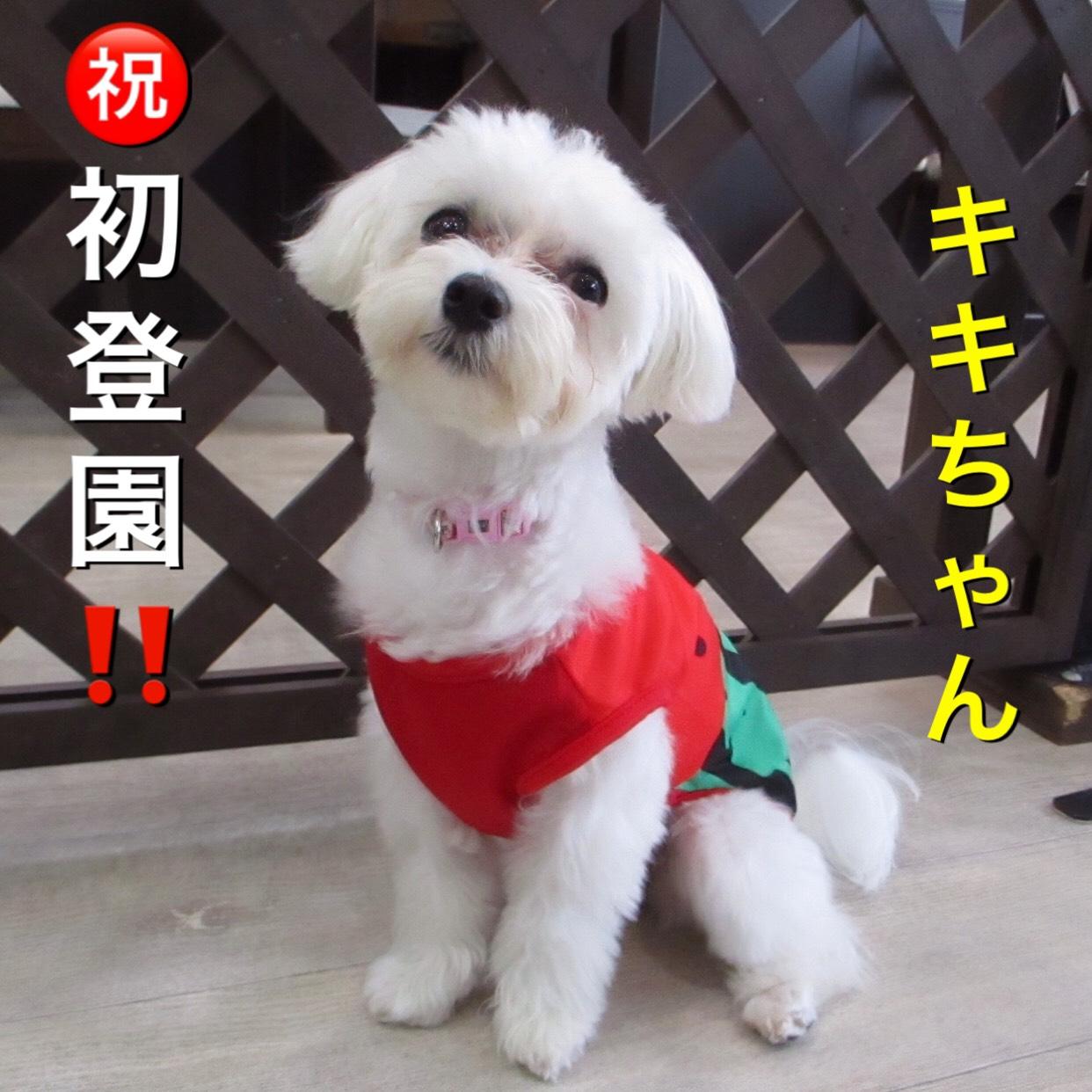 キキちゃん・犬の保育園Baby・犬・犬のしつけ・犬の社会化