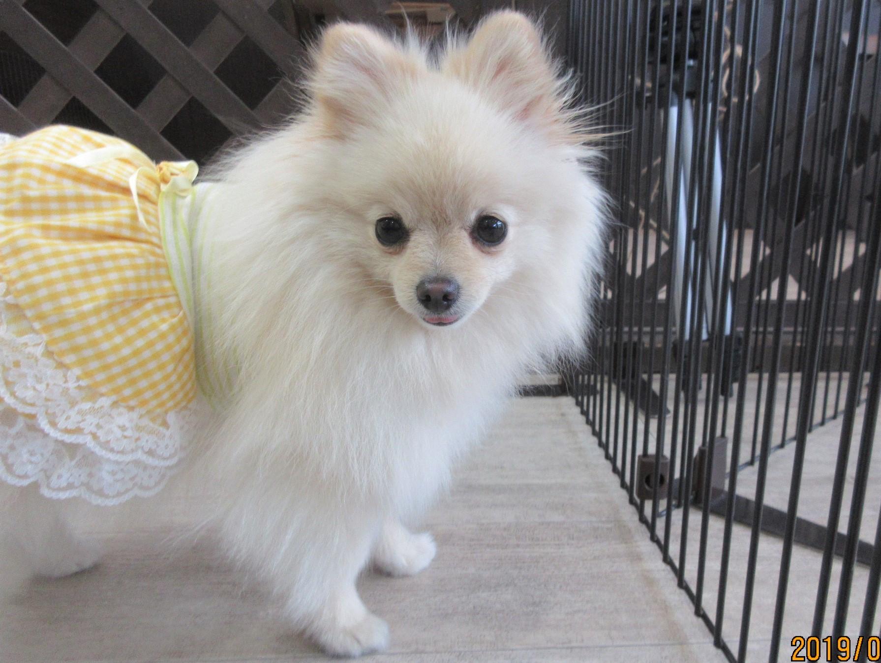 リンちゃん・犬の保育園Baby・犬・犬のしつけ・犬の社会化