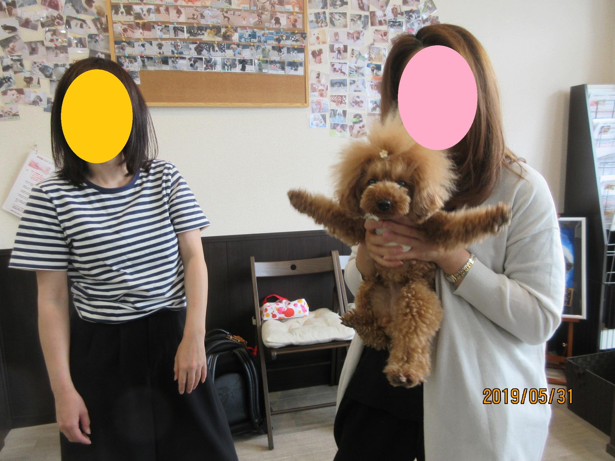 犬の保育園Baby・犬・犬のしつけ・犬の社会化・ママさんのご協力