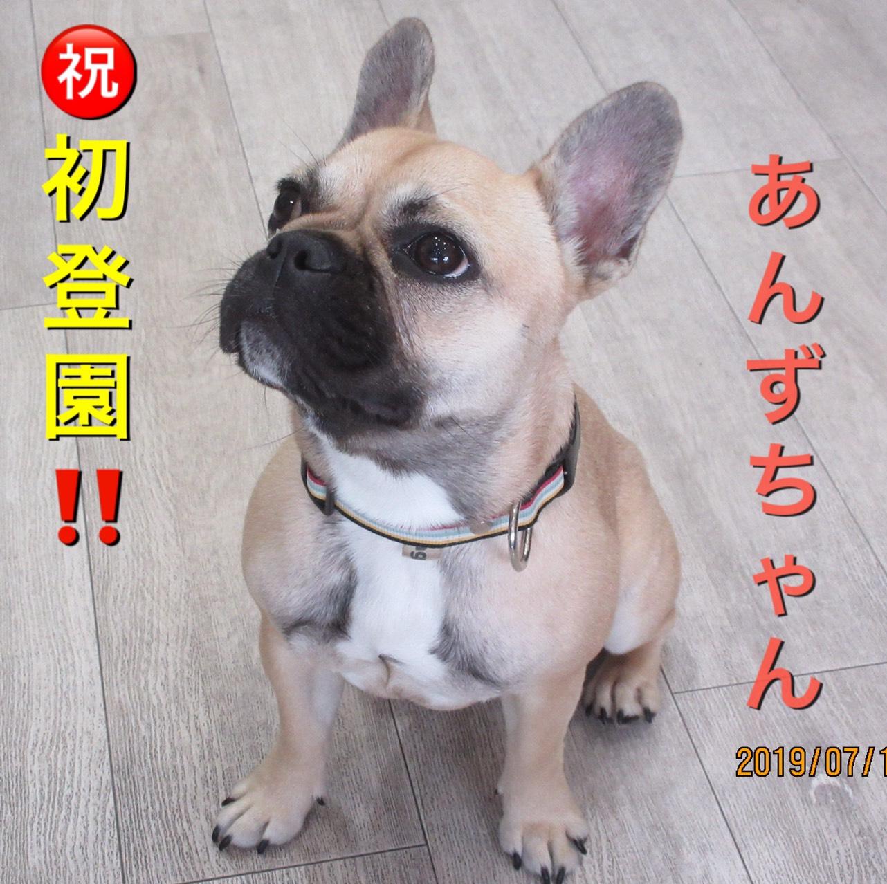 あんずちゃん・犬の保育園Baby・犬・犬のしつけ・犬の社会化