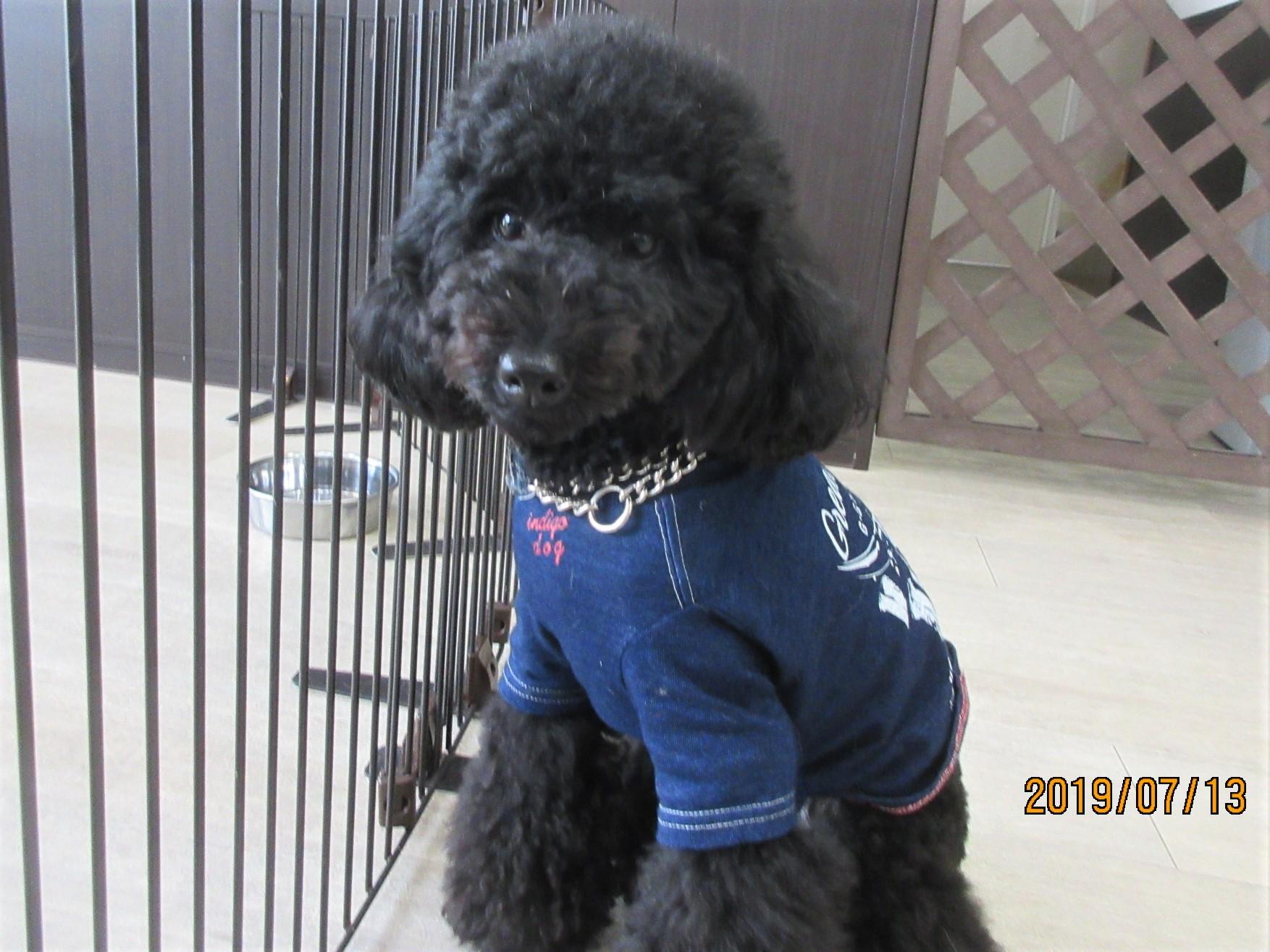 ピリアロハくん(通称ピリくん)・犬の保育園Baby・犬・犬のしつけ・犬の社会化