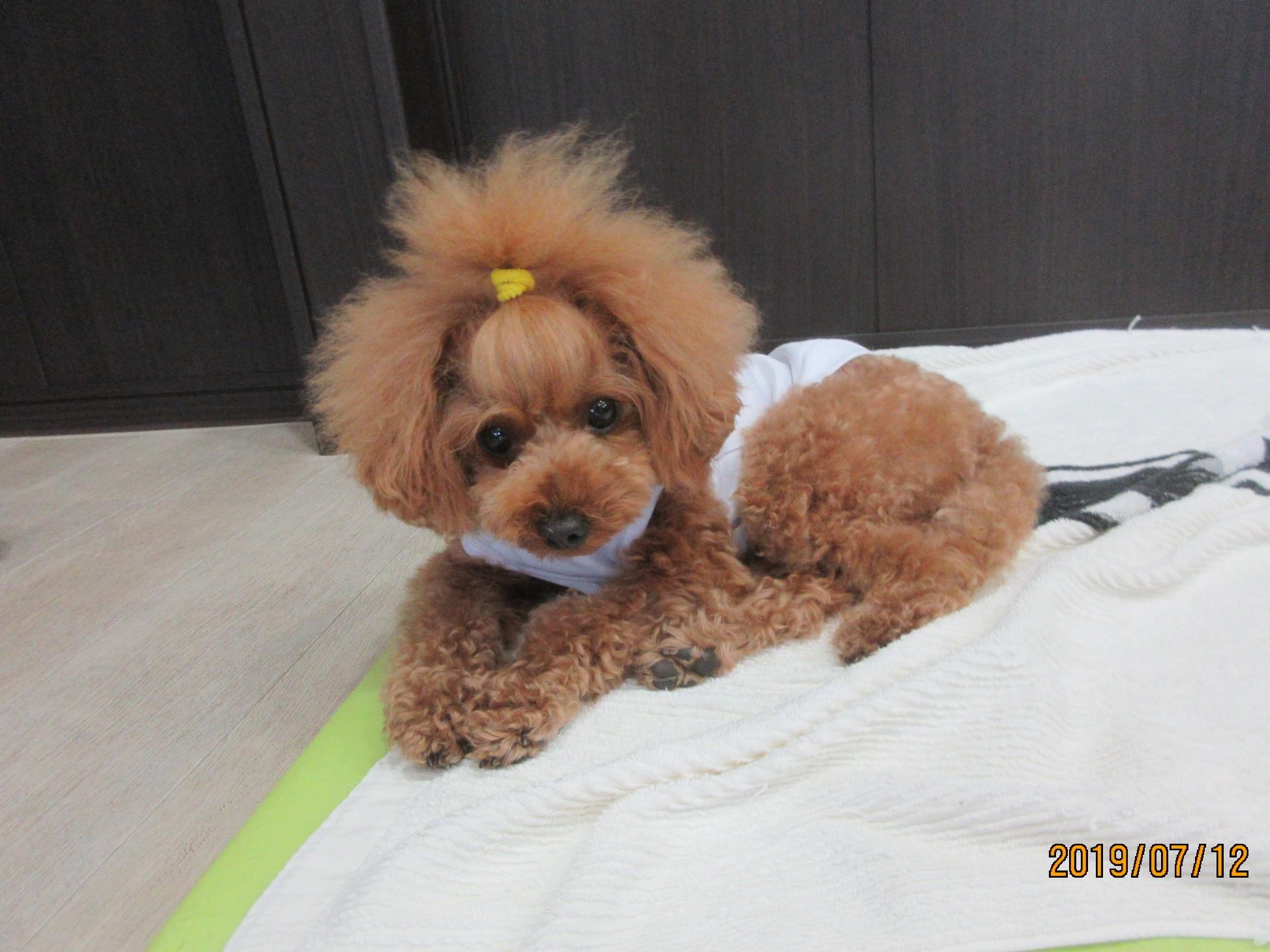 こむぎちゃん(通称むぎちゃん)・犬の保育園Baby・犬・犬のしつけ・犬の社会化