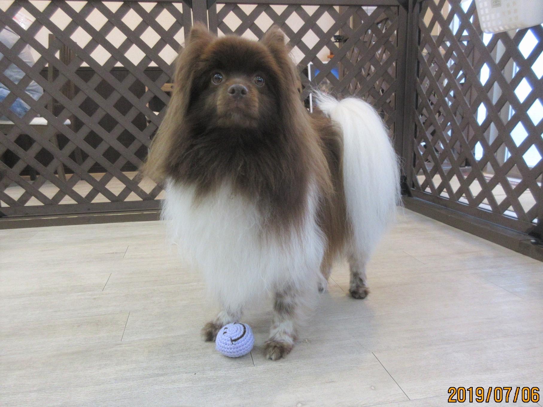 クッキーとニコちゃんボール・犬の保育園Baby・犬