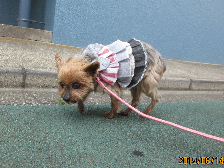犬の保育園Baby・犬・お預り