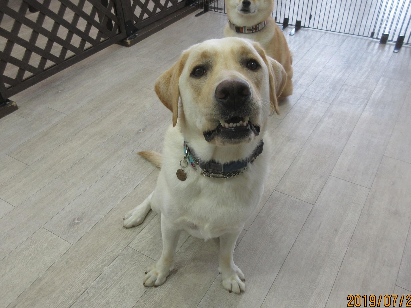 Osloくん・犬の保育園Baby・犬・犬のしつけ・犬の社会化・習志野市・八千代市・船橋市