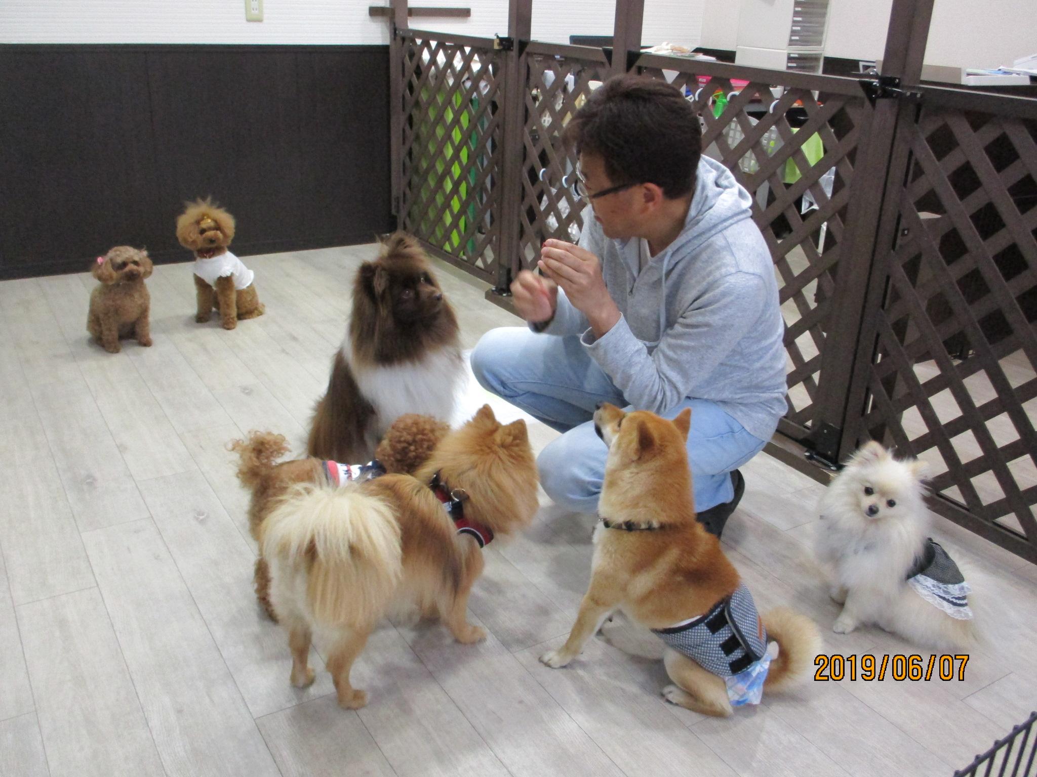 犬の保育園Baby・犬・犬のしつけ・犬の社会化・お預り