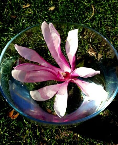 Herstellung einer Blütenessenz