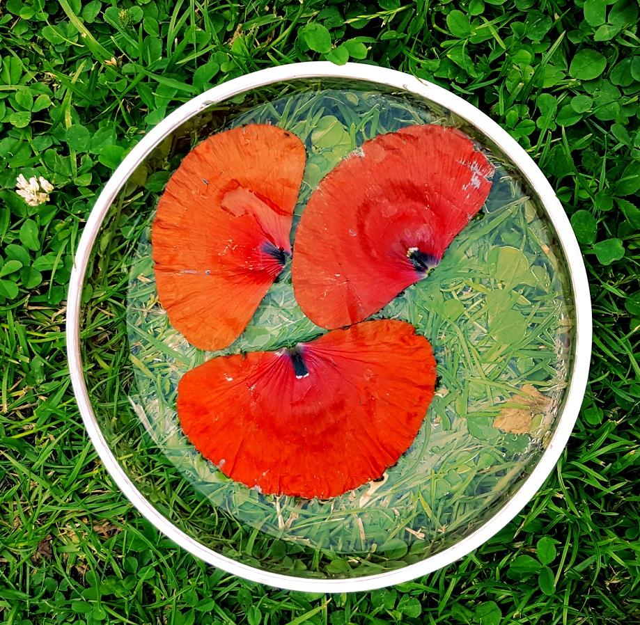Herstellung einer Klatschmohnblüten Essenz