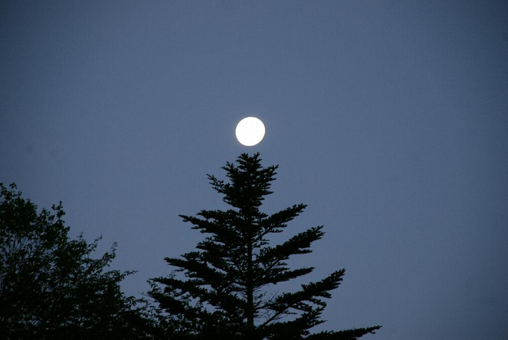 ツリーの上の満月