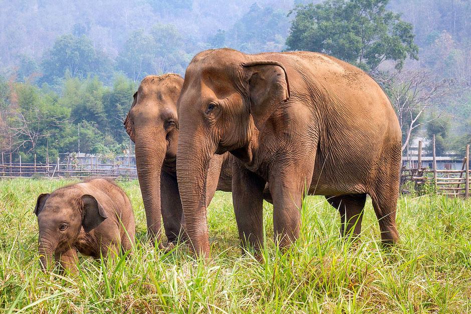 Wildlife Conservation Thailand Volunteers