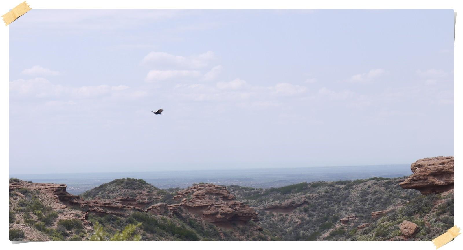 und wieder ein Condor