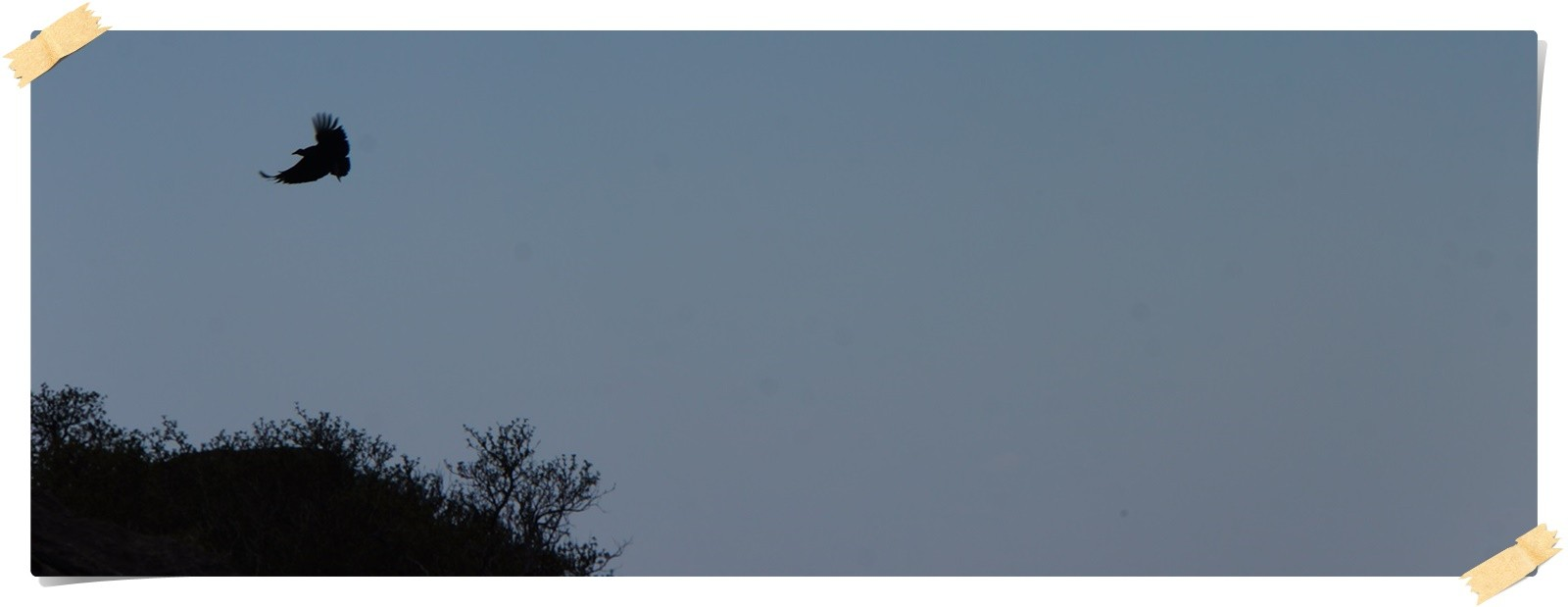 ...einen Condor zu sehen