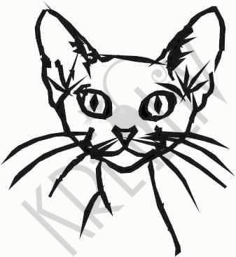 Abessinier Katzenkopf