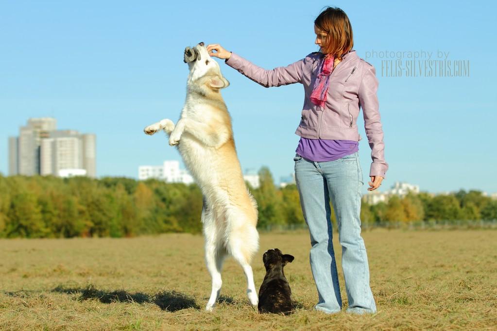 flying husky
