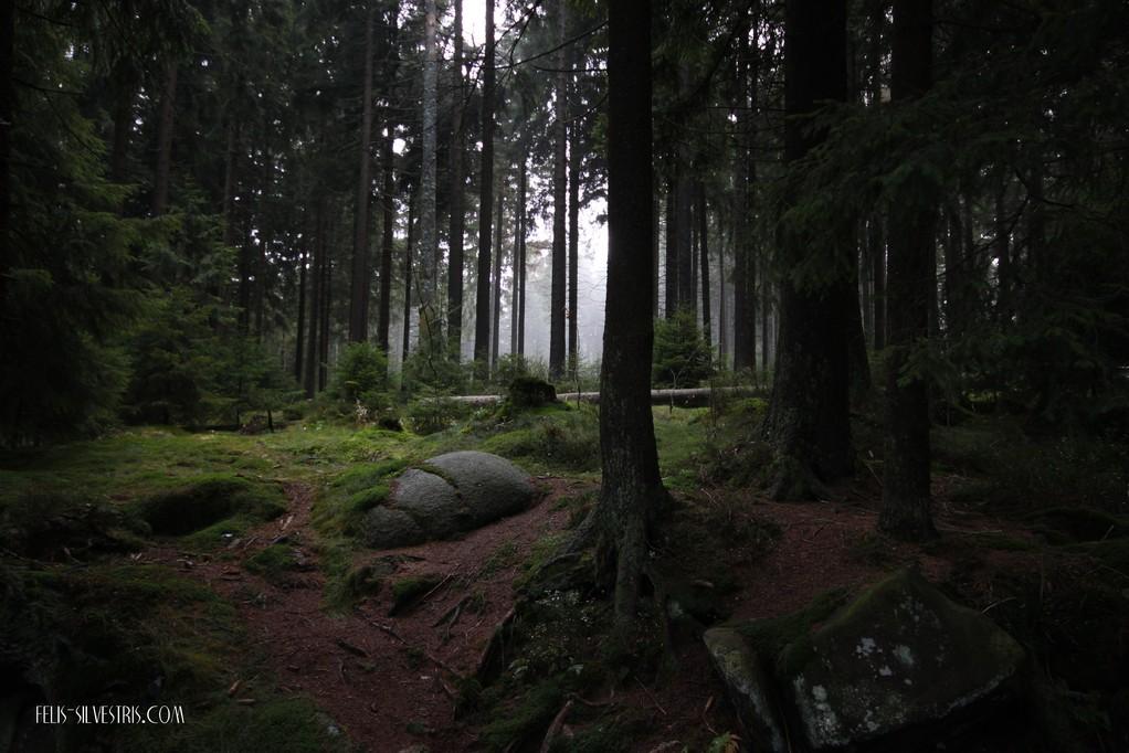 Wald am Götheweg