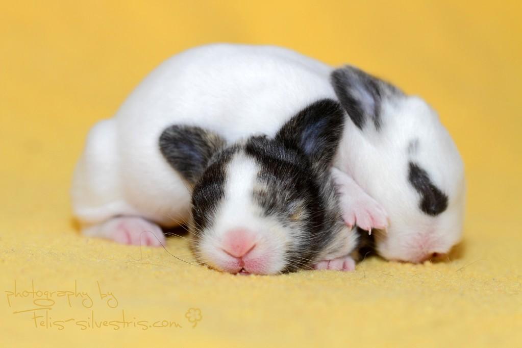 zwei Kaninchenbabys