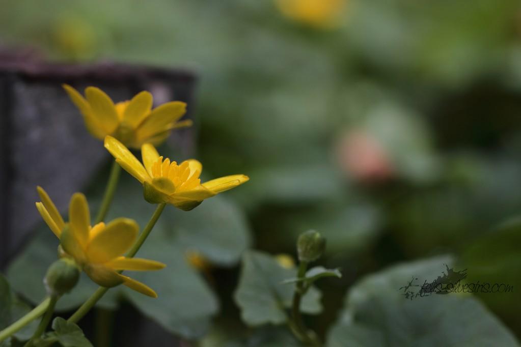klein, gelb und Wild