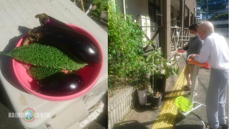 収穫(さくらんぼ,訪問看護・福岡/レインボーアース)