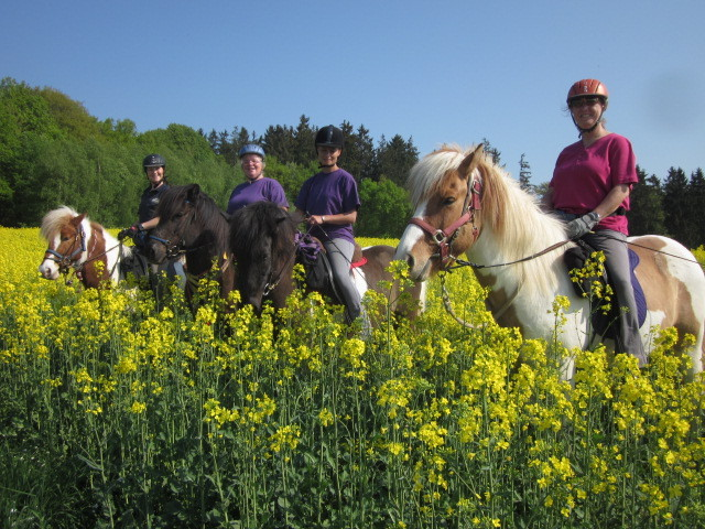 Tagesritt entlang des Limes auf Islandpferden