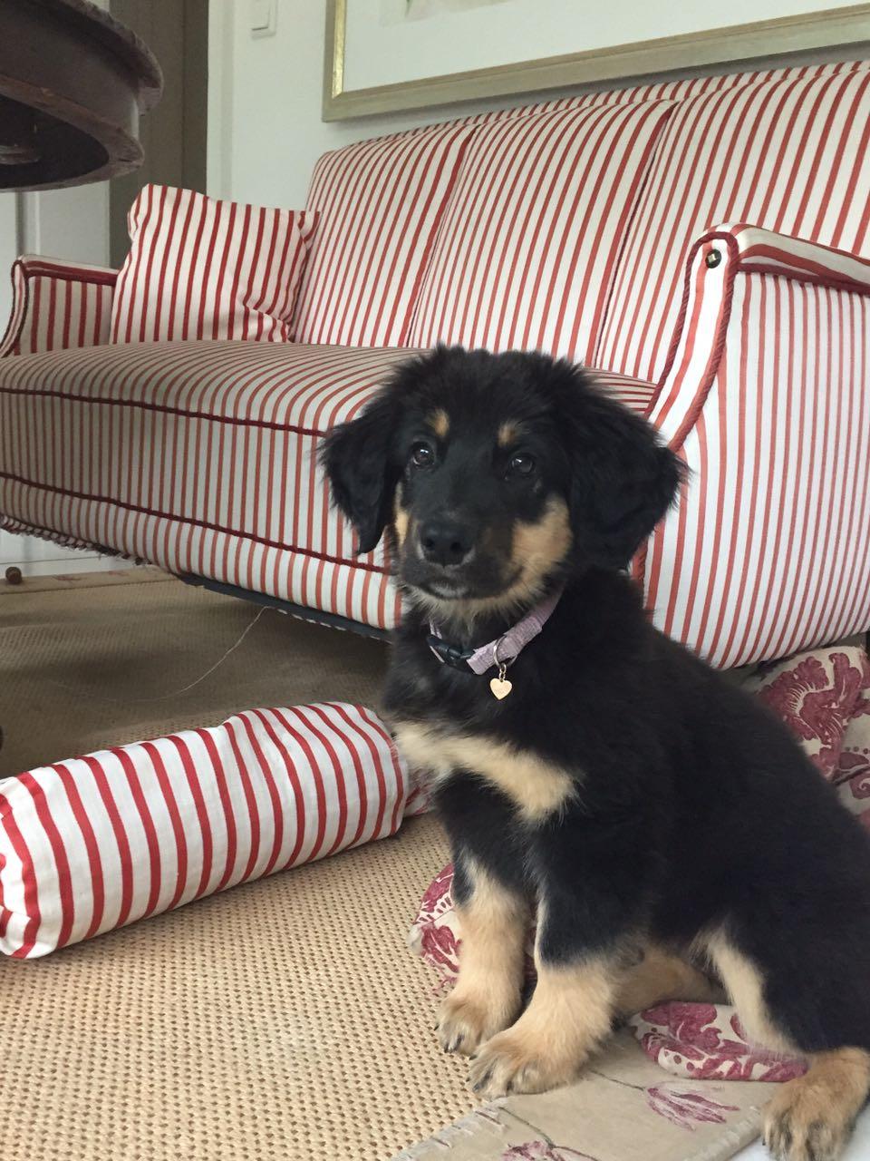 """Darf ich auf""""s Sofa?"""