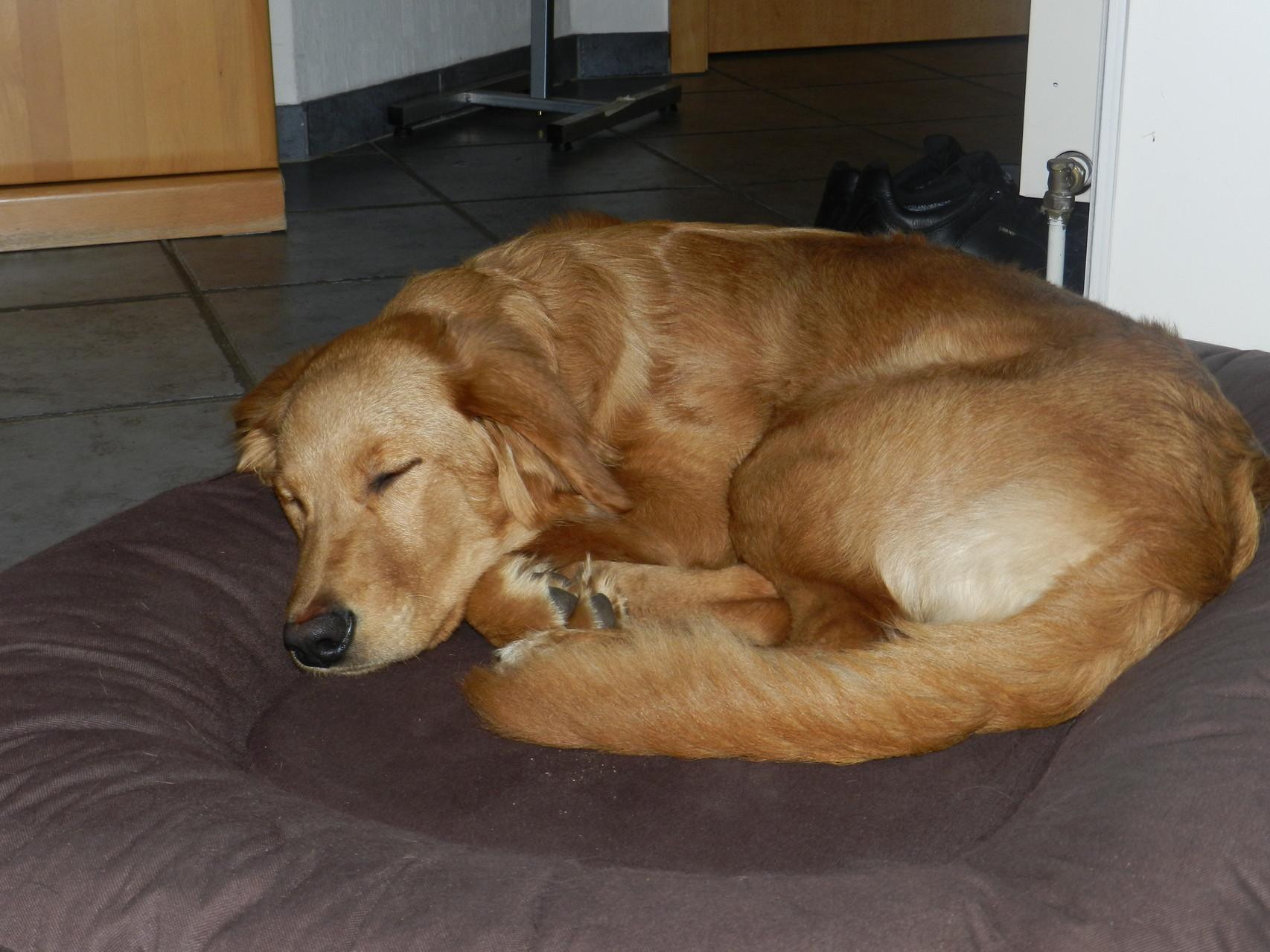 Januar 2014: Ditz relaxt nach einem anstrengenden Tag im alten Rudel