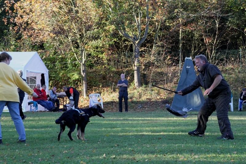 Ingos Beutespiel mit Nachwuchshund Dakota