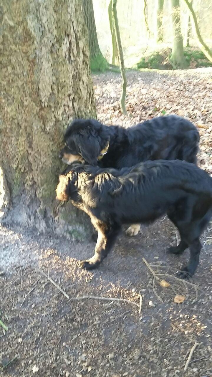 Waldspaziergang mit Oma Desdemona