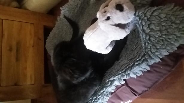 Enya liebt ihr neues Spielzeug