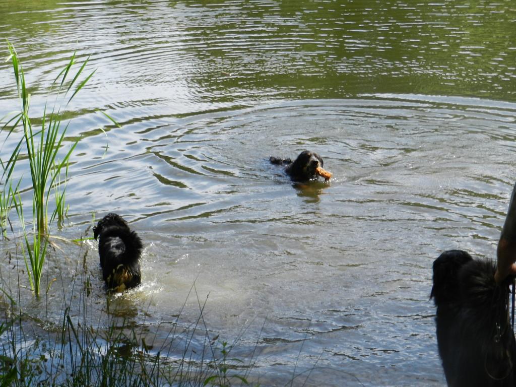 """""""Opaschwimmen"""" -alle anderen brauchten noch Boden unter den Pfoten"""