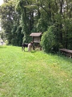 Bounty und Mr. Tom bekamen Äpfel und frisches Gras :-)