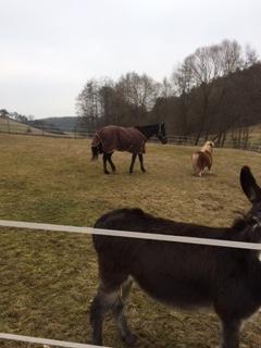 Er ist der Boss und in der kleinen Herde gut aufgenommen worden, Freddy ist sein bester Freund, die Zwei sind unzertrennlich.