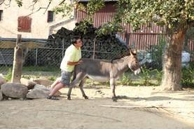 Folke mit einem ihrer Esel auf der Eselsbrücke! :-) hi,hi,hi wer mit Eseln lebt kennt diese Situation, den Esel schieben zu müssen. Meist erfolglos! hi,hi,hi