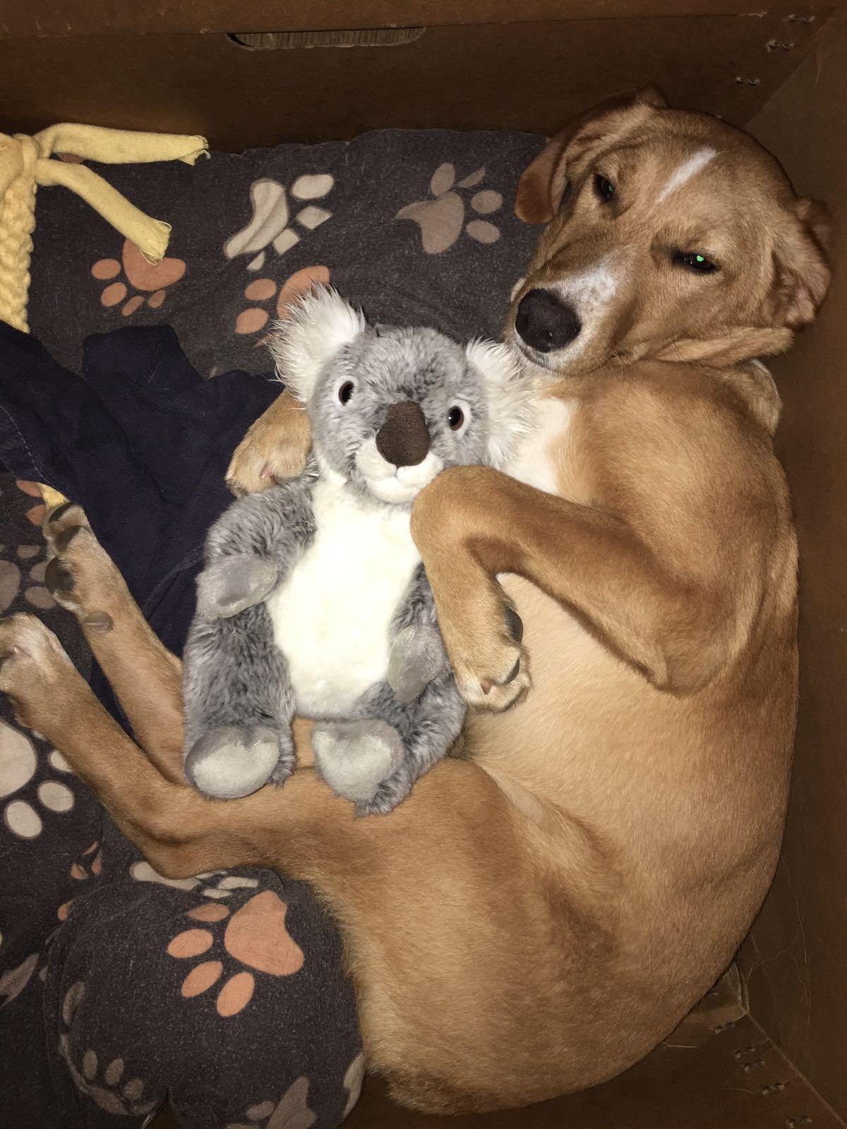 Herr Rossi mit einem Teddy