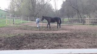 Das Training mit Paul macht große Fortschritte, er macht gut mit und möchte gefallen.