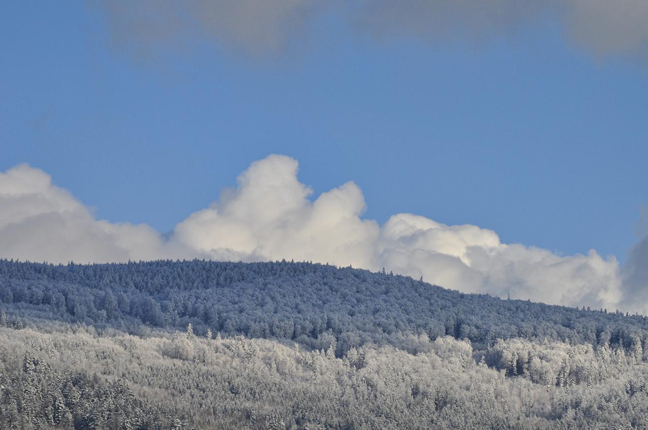 Winterwald in Bayern!