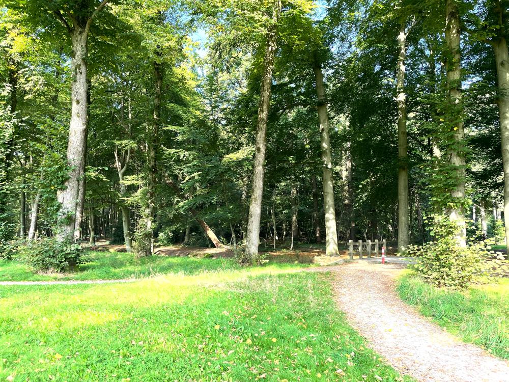 Deswegen bin ich die Strecke durch den Wald gefahren, nicht bequem zu fahren aber schön!