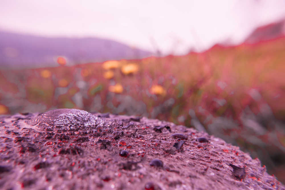 Pink Herbstsinfonie
