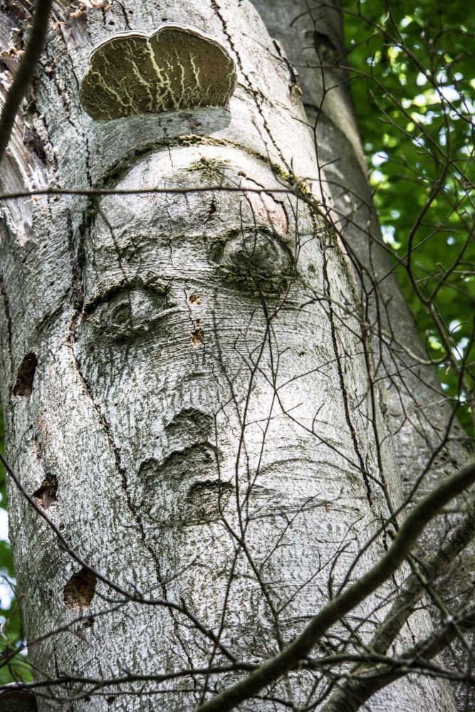 Unser Wald lebt