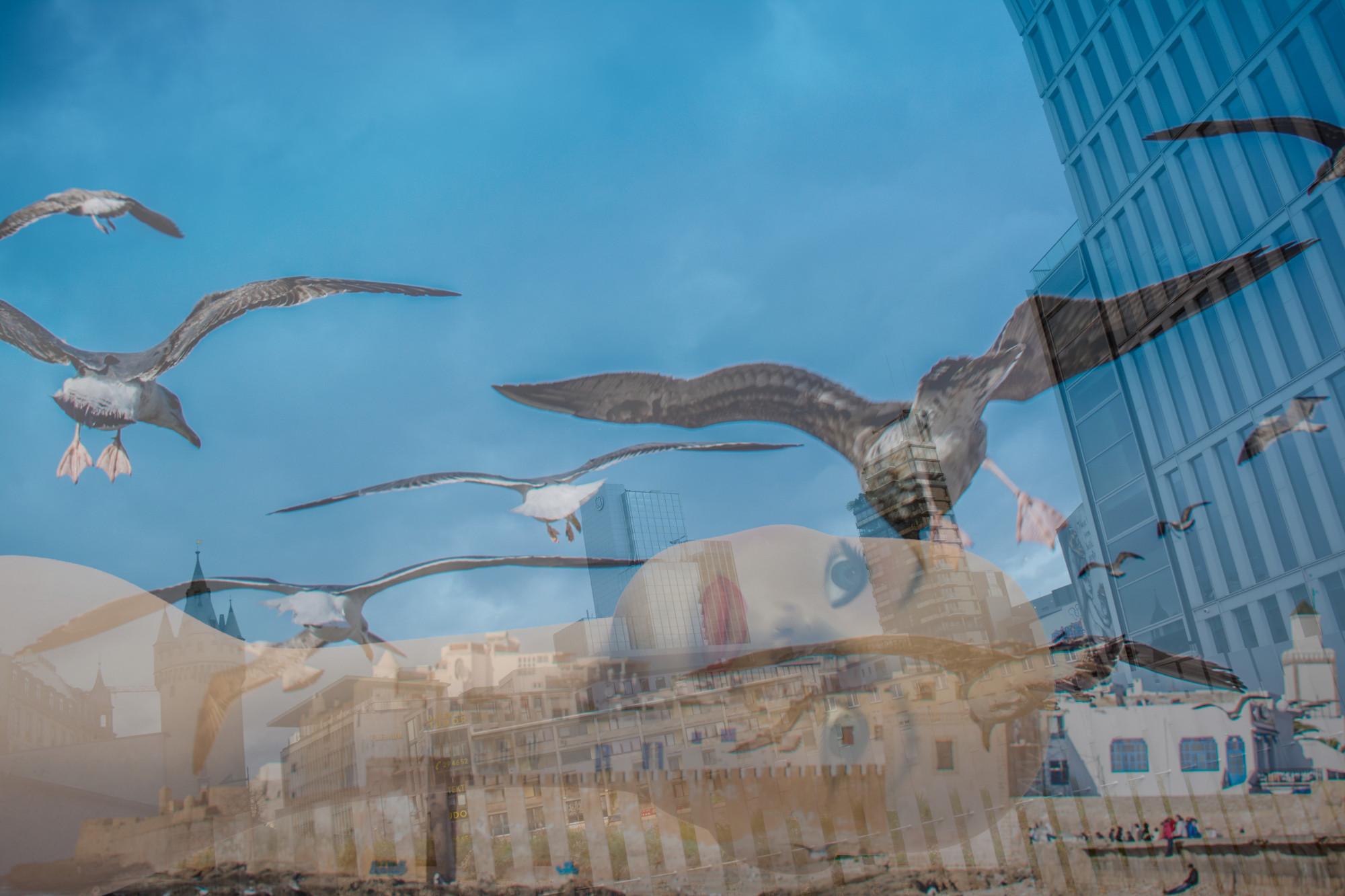 Die Vögel II